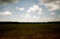 Delta landscape